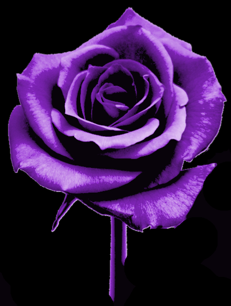 A shockey horror suspense novels include dark transition for Purple rose pictures
